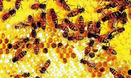 Házi Méhek