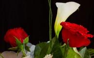Egy gyönyörű virágnak minden Nő nagyon örül. Virágküldés már online is lehetséges (Fotó: www.fksz.hu/Nagy Arnold)