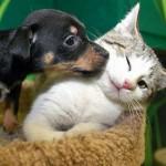 Fontos a rendszeres tájékozódás az állattulajdonosoknak