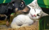 Kisállatokkal való törődés - Egy kisállatot nem elég megvenni vagy befogadni, folyamatos törődést és szeretetet is kell neki megadni.