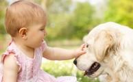 Baba és kutya együtt a családban – sok esetben imádják egymást, de nem árt az elővigyázatosság a biztonság érdekében