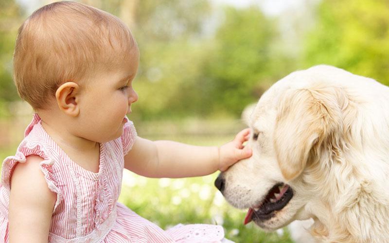 Baba és kutya együtt a családban