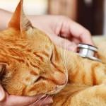 Milyen súlyos betegséget kaphatunk el a macskánktól?